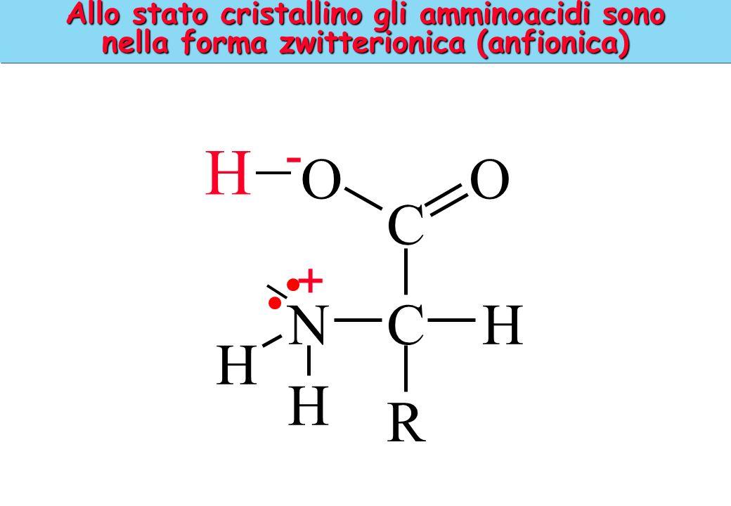 Allo stato cristallino gli amminoacidi sono nella forma zwitterionica (anfionica) H C OO CHN H H R - +