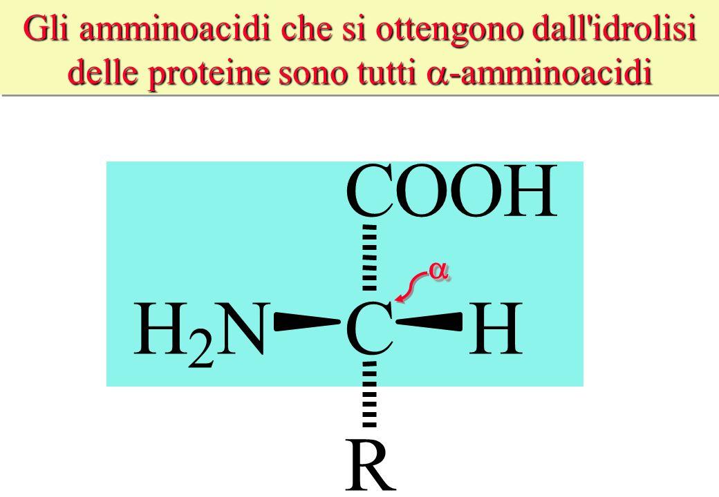 Gli amminoacidi che si ottengono dall'idrolisi delle proteine sono tutti -amminoacidi CHH 2 N COOH R