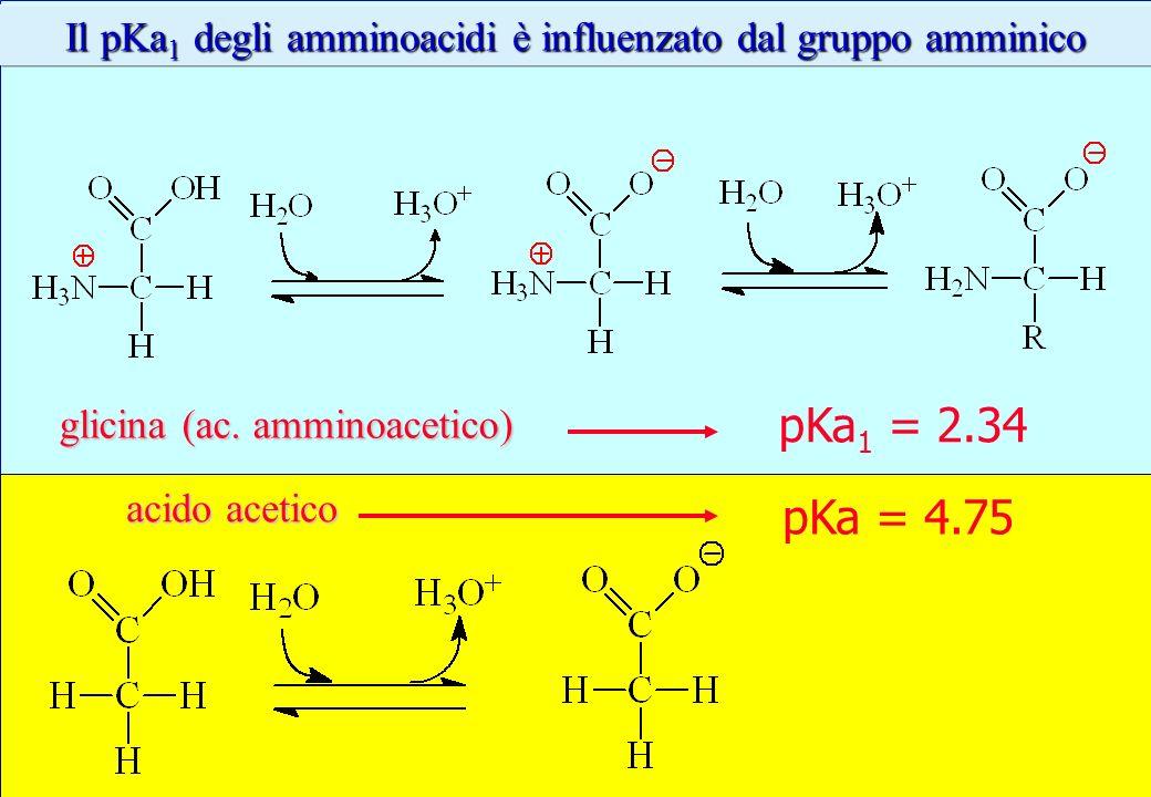 Il pKa 1 degli amminoacidi è influenzato dal gruppo amminico pKa 1 = 2.34 glicina (ac. amminoacetico) pKa = 4.75 acido acetico