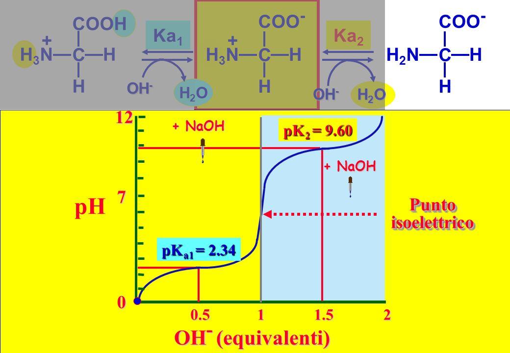 0.511.52 OH - (equivalenti) pK a1 = 2.34 pK 2 = 9.60 PuntoisoelettricoPuntoisoelettrico COOH C HH3NH3N H + 0 712 pH H2OH2O Ka 1 COO - C HH3NH3N H + OH