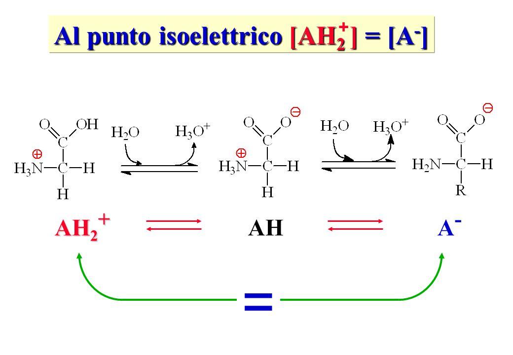 Al punto isoelettrico [AH 2 ] = [A - ] + AH 2 + A-A- AH =