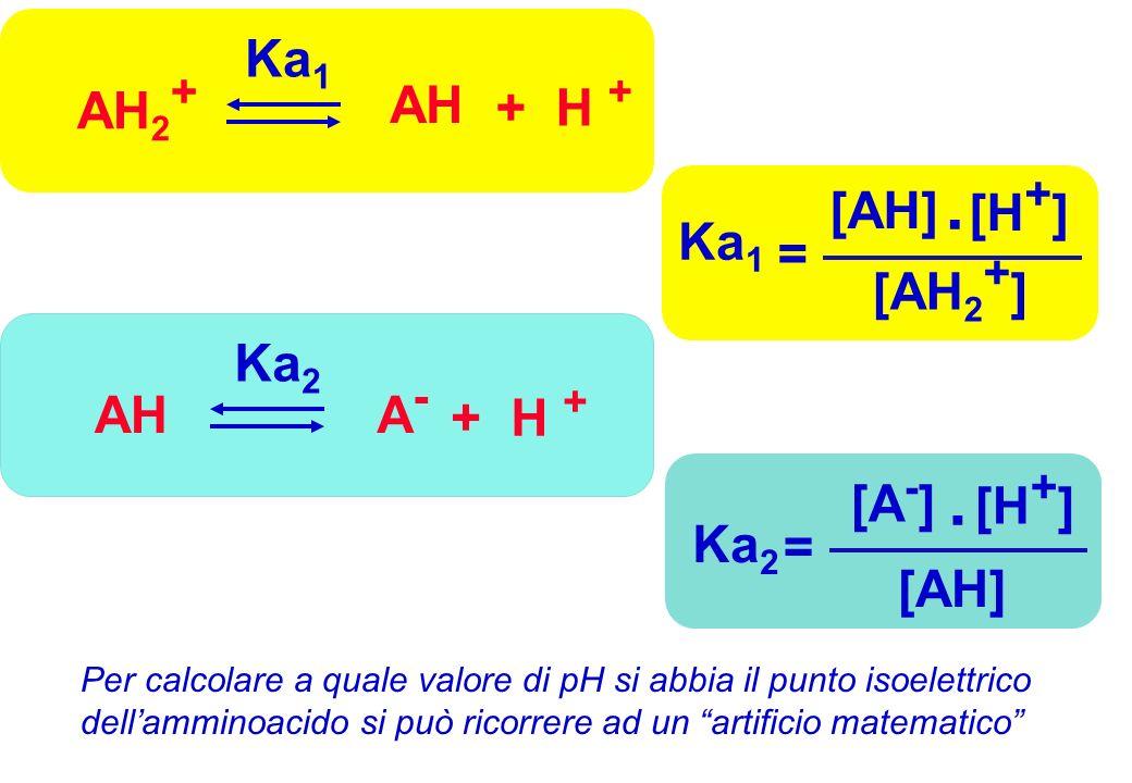 Ka 1 = [AH] [H + ] [AH 2 + ]. Ka 2 = [A - ] [H + ] [AH]. AH 2 + AH + H + Ka 1 A-A- AH + H + Ka 2 Per calcolare a quale valore di pH si abbia il punto