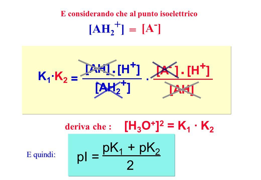 K1·K2K1·K2 = [AH] [H + ] [AH 2 + ]. · [A - ][H + ] [AH]. = [AH 2 + ] [A - ] [H 3 O + ] 2 = K 1 · K 2 deriva che : pK 1 + pK 2 pI = 2 E considerando ch