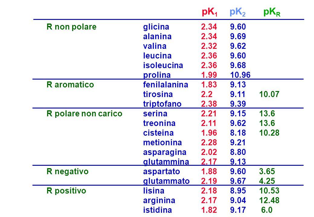 R non polare R aromatico R polare non carico R negativo R positivo glicina2.349.60 alanina2.349.69 valina2.329.62 leucina2.369.60 isoleucina2.369.68 p