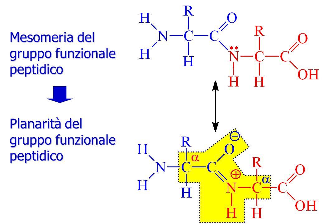 Mesomeria del gruppo funzionale peptidico Planarità del gruppo funzionale peptidico