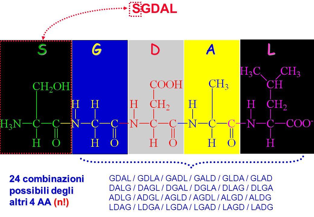 SGDAL GDAL / GDLA / GADL / GALD / GLDA / GLAD DALG / DAGL / DGAL / DGLA / DLAG / DLGA ADLG / ADGL / AGLD / AGDL / ALGD / ALDG LDAG / LDGA / LGDA / LGA