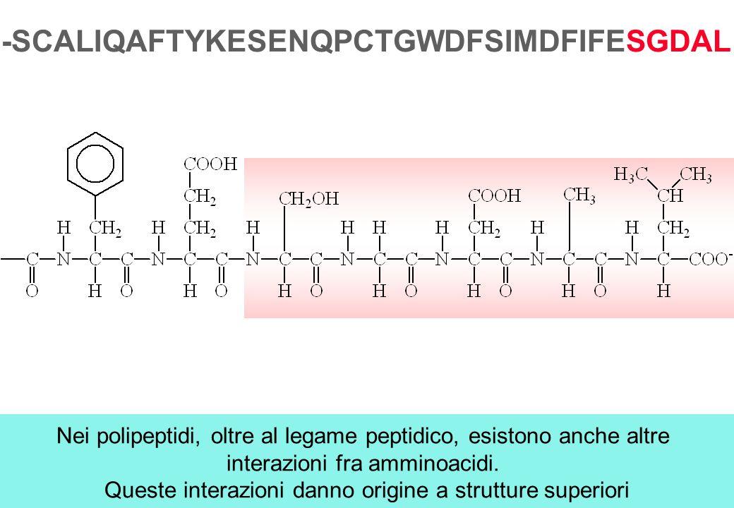 Nei polipeptidi, oltre al legame peptidico, esistono anche altre interazioni fra amminoacidi. Queste interazioni danno origine a strutture superiori -