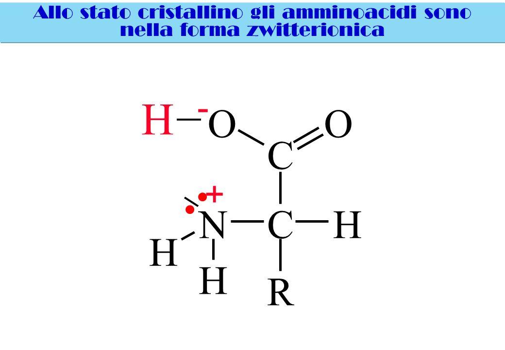 Allo stato cristallino gli amminoacidi sono nella forma zwitterionica H C OO CHN H H R - +
