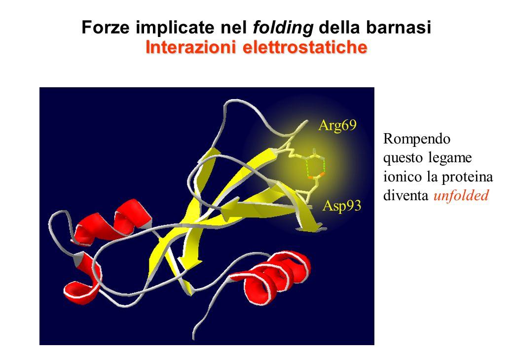 Interazioni elettrostatiche Forze implicate nel folding della barnasi Interazioni elettrostatiche Arg69 Asp93 Rompendo questo legame ionico la protein