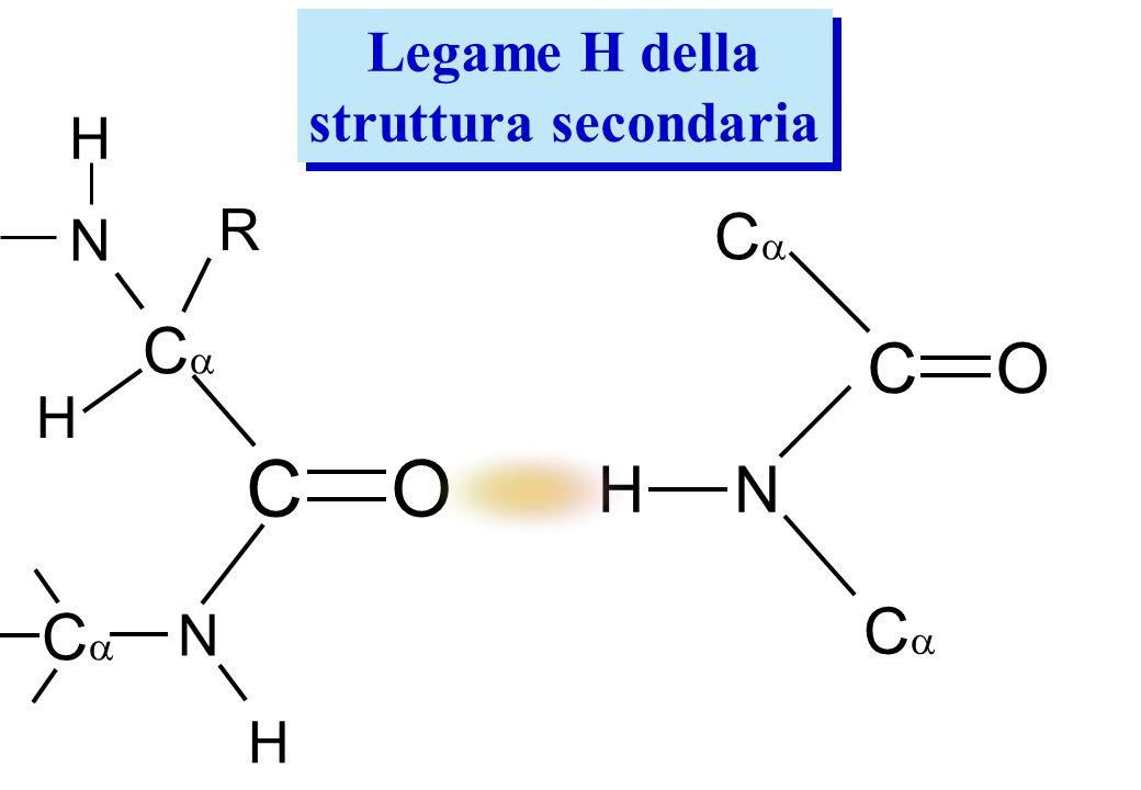 Legame H della struttura secondaria Legame H della struttura secondaria C O N R C H H N C O C H N H C C