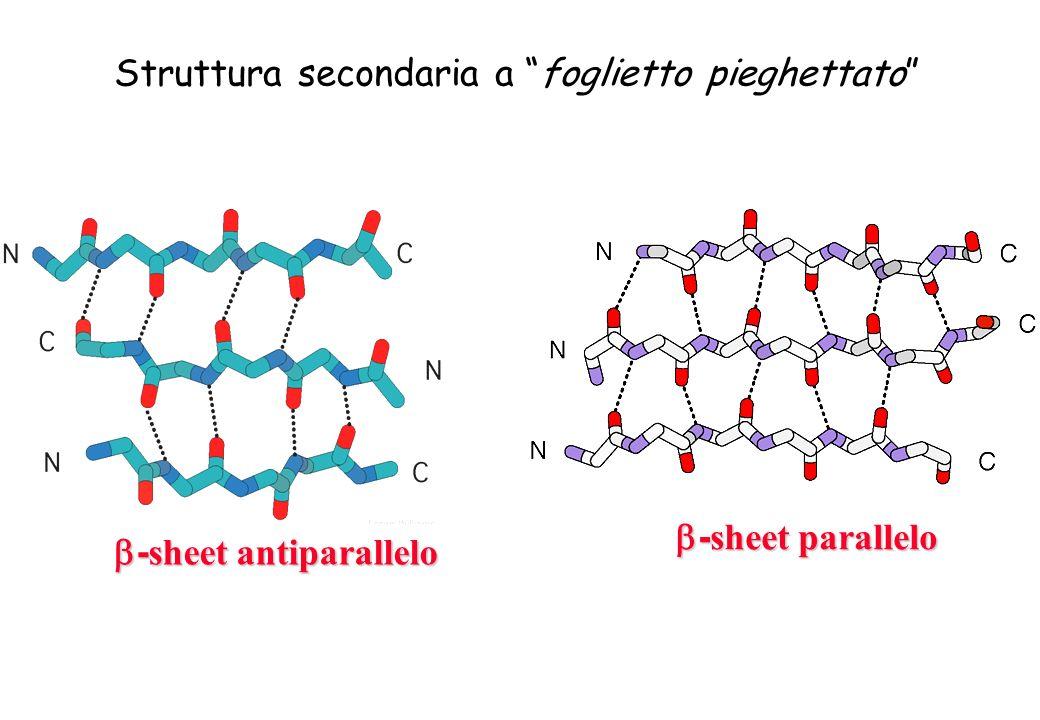 - sheet antiparallelo - sheet antiparallelo - sheet parallelo - sheet parallelo Struttura secondaria a foglietto pieghettato