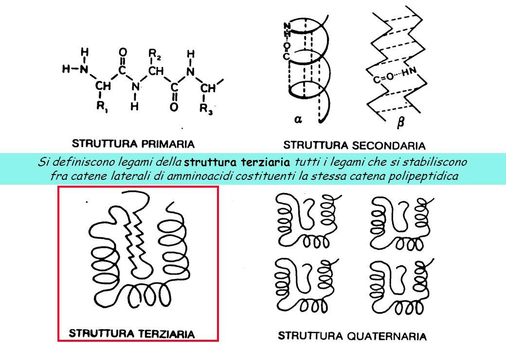 Si definiscono legami della struttura terziaria tutti i legami che si stabiliscono fra catene laterali di amminoacidi costituenti la stessa catena pol