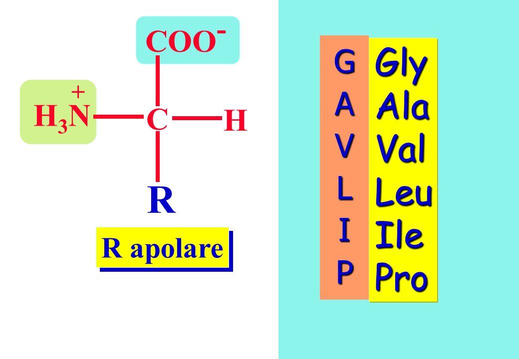 R apolare COO - C H R H3NH3N + Gly Ala Val Leu Ile Pro GAVLIP