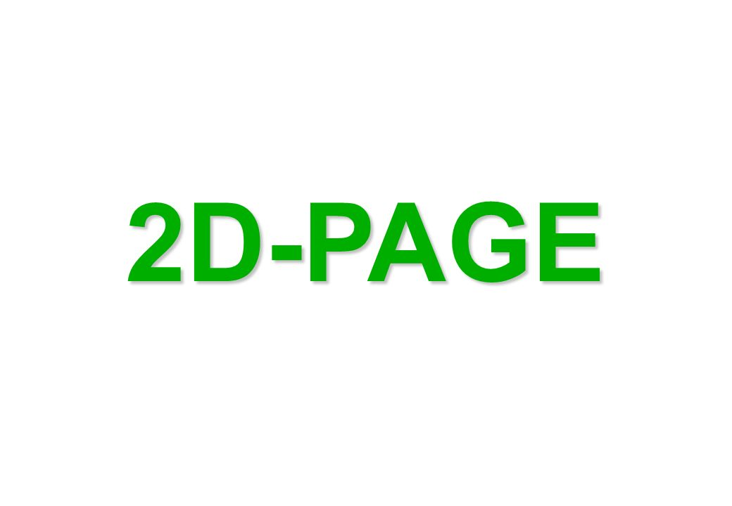 2D-PAGE