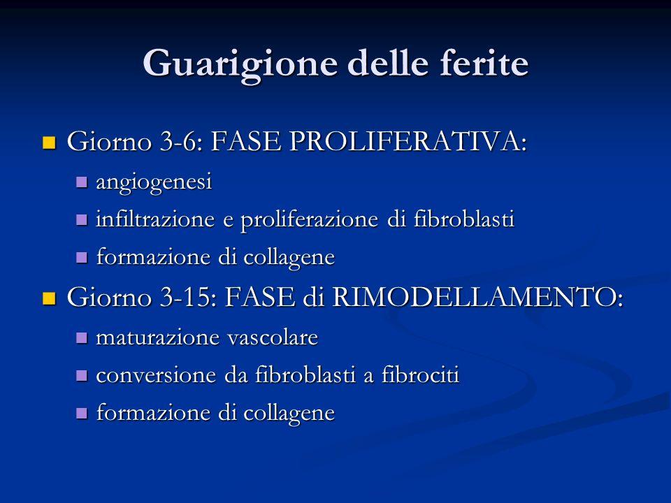 Guarigione delle ferite Giorno 3-6: FASE PROLIFERATIVA: Giorno 3-6: FASE PROLIFERATIVA: angiogenesi angiogenesi infiltrazione e proliferazione di fibr