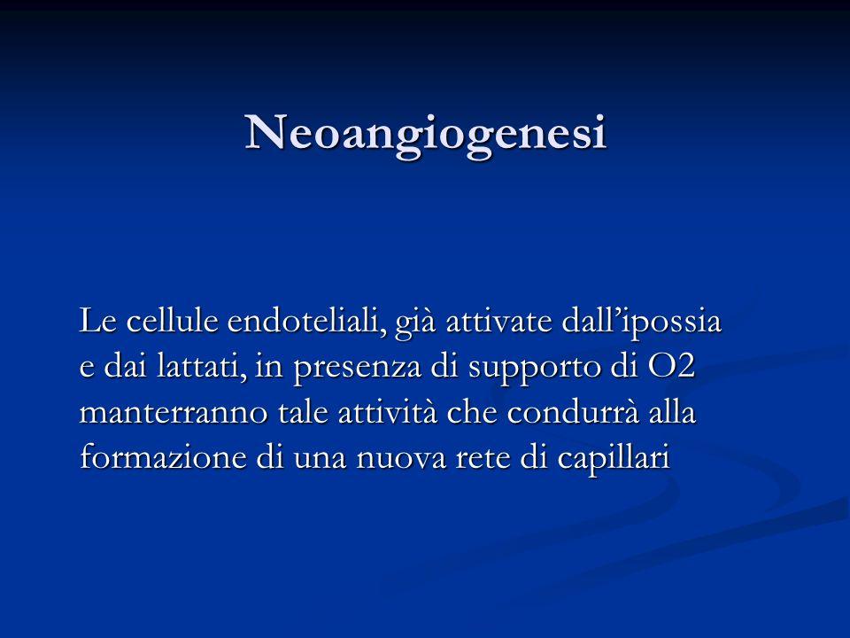 Neoangiogenesi Le cellule endoteliali, già attivate dallipossia e dai lattati, in presenza di supporto di O2 manterranno tale attività che condurrà al