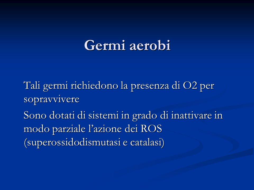Germi aerobi Tali germi richiedono la presenza di O2 per sopravvivere Sono dotati di sistemi in grado di inattivare in modo parziale lazione dei ROS (