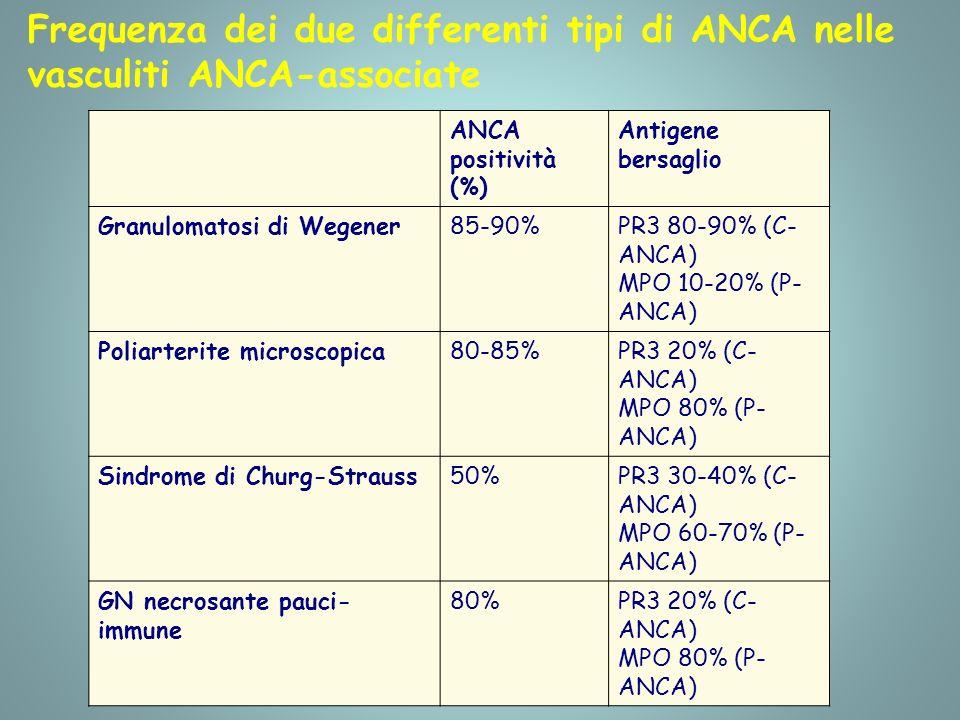 Frequenza dei due differenti tipi di ANCA nelle vasculiti ANCA-associate ANCA positività (%) Antigene bersaglio Granulomatosi di Wegener85-90%PR3 80-90% (C- ANCA) MPO 10-20% (P- ANCA) Poliarterite microscopica80-85%PR3 20% (C- ANCA) MPO 80% (P- ANCA) Sindrome di Churg-Strauss50%PR3 30-40% (C- ANCA) MPO 60-70% (P- ANCA) GN necrosante pauci- immune 80%PR3 20% (C- ANCA) MPO 80% (P- ANCA)