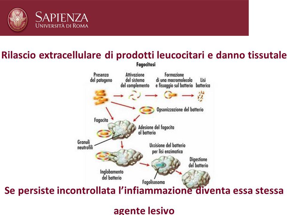 Rilascio extracellulare di prodotti leucocitari e danno tissutale Se persiste incontrollata linfiammazione diventa essa stessa agente lesivo