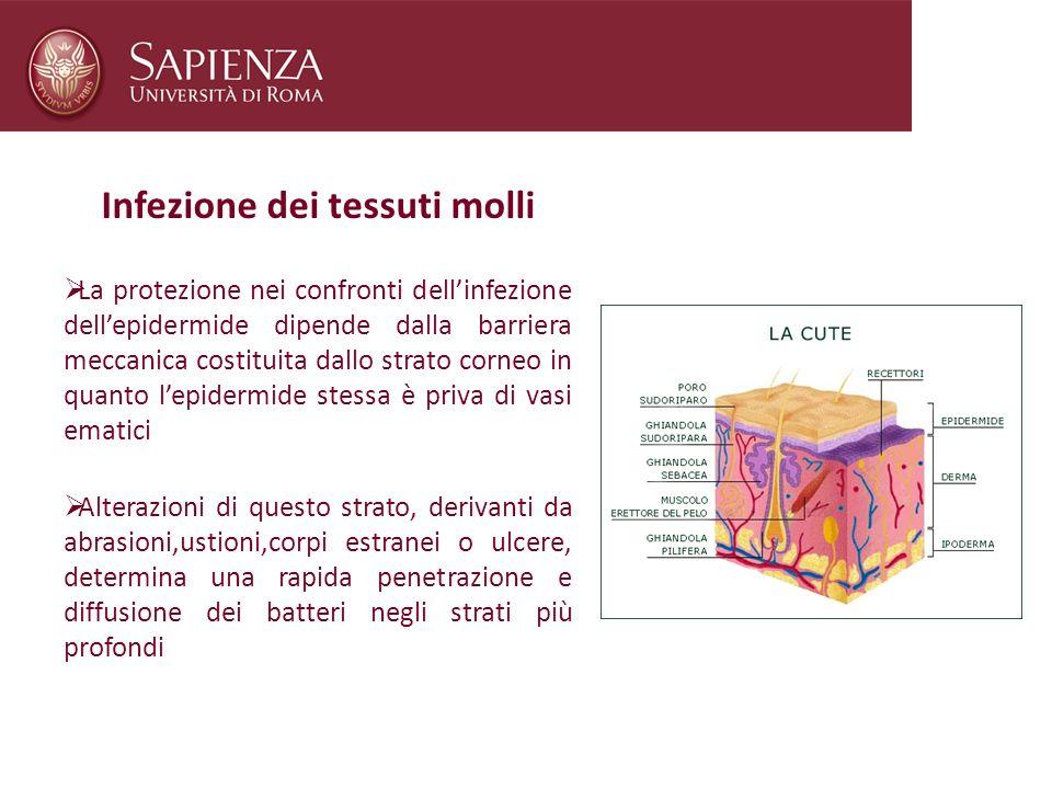 Infezione dei tessuti molli La protezione nei confronti dellinfezione dellepidermide dipende dalla barriera meccanica costituita dallo strato corneo i