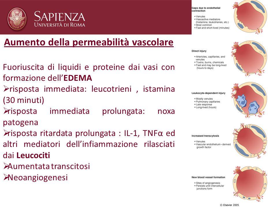 Aumento della permeabilità vascolare Fuoriuscita di liquidi e proteine dai vasi con formazione dellEDEMA risposta immediata: leucotrieni, istamina (30