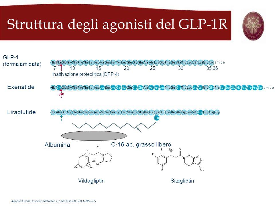 Struttura degli agonisti del GLP-1R VildagliptinSitagliptin Albumina C-16 ac. grasso libero Liraglutide Exenatide GLP-1 (forma amidata) Inattivazione