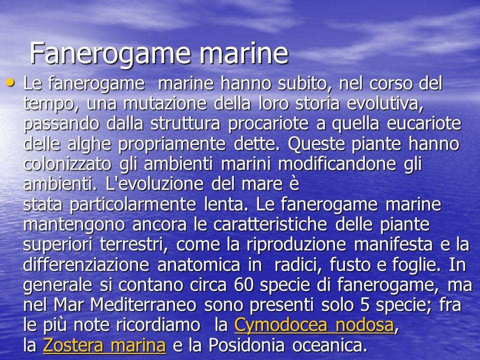 Fanerogame marine Le fanerogame marine hanno subito, nel corso del tempo, una mutazione della loro storia evolutiva, passando dalla struttura procario