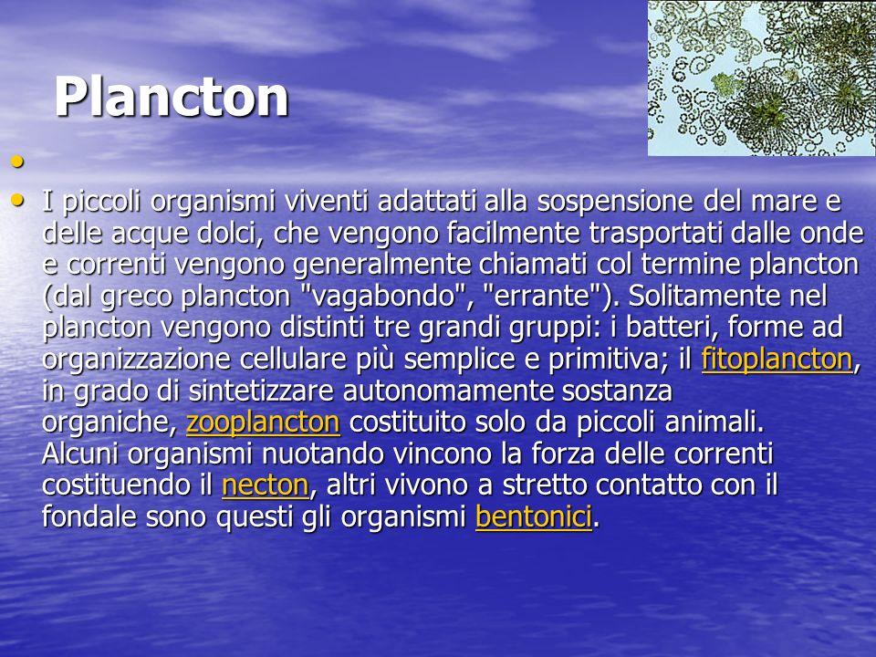 Plancton I piccoli organismi viventi adattati alla sospensione del mare e delle acque dolci, che vengono facilmente trasportati dalle onde e correnti