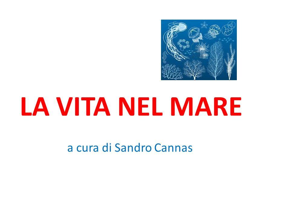 LA VITA NEL MARE a cura di Sandro Cannas