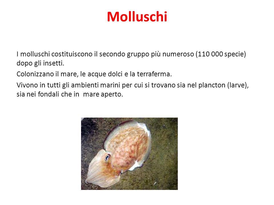 Molluschi I molluschi costituiscono il secondo gruppo più numeroso (110 000 specie) dopo gli insetti. Colonizzano il mare, le acque dolci e la terrafe
