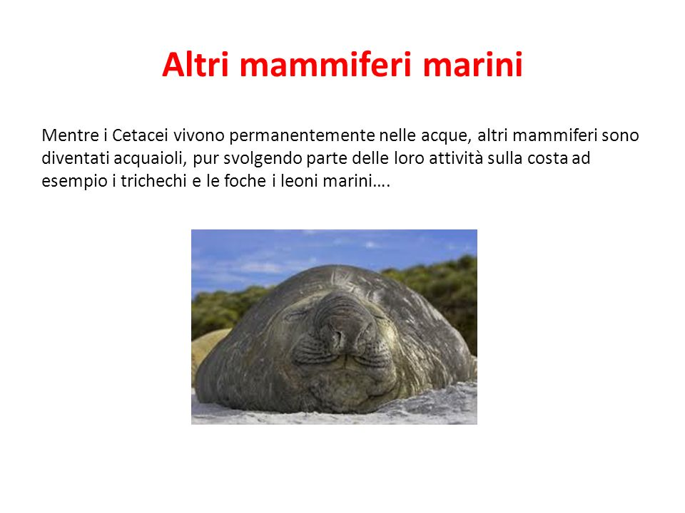 Altri mammiferi marini Mentre i Cetacei vivono permanentemente nelle acque, altri mammiferi sono diventati acquaioli, pur svolgendo parte delle loro a