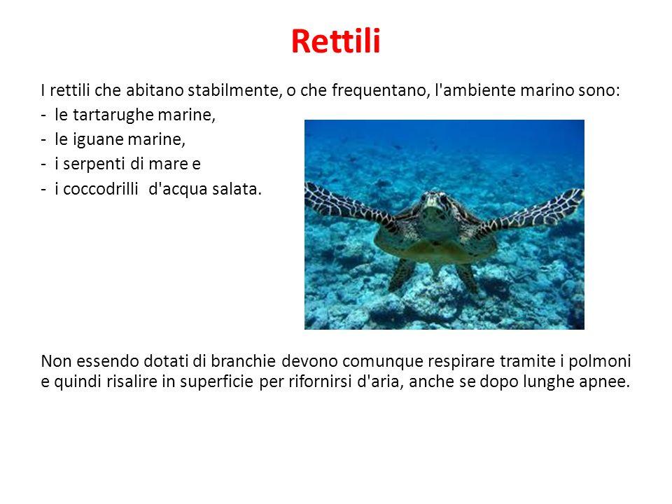 Rettili I rettili che abitano stabilmente, o che frequentano, l'ambiente marino sono: - le tartarughe marine, - le iguane marine, - i serpenti di mare