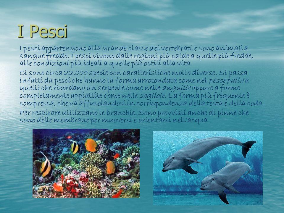 I Pesci I pesci appartengono alla grande classe dei vertebrati e sono animaIi a sangue freddo. I pesci vivono dalle regioni più calde a quelle più fre