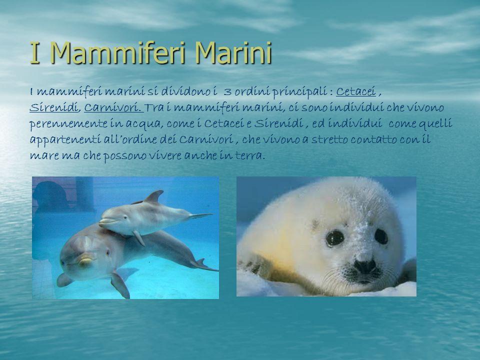 I Mammiferi Marini I mammiferi marini si dividono i 3 ordini principali : Cetacei, Sirenidi, Carnivori. Tra i mammiferi marini, ci sono individui che
