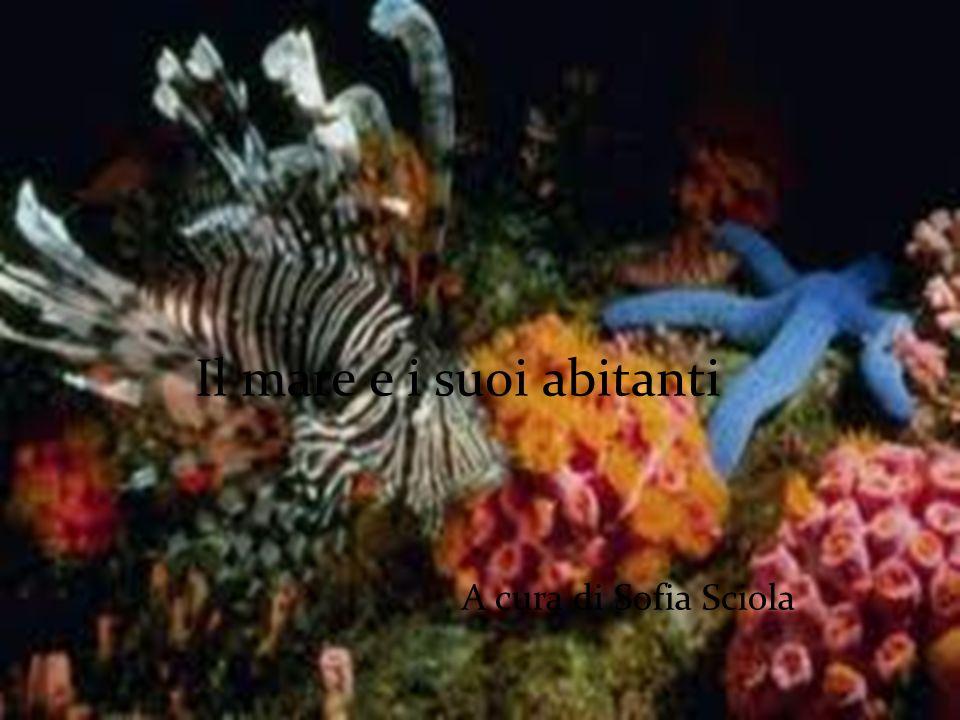 A cura di Sofia Sciola Il mare e i suoi abitanti A cura di Sofia Sciola