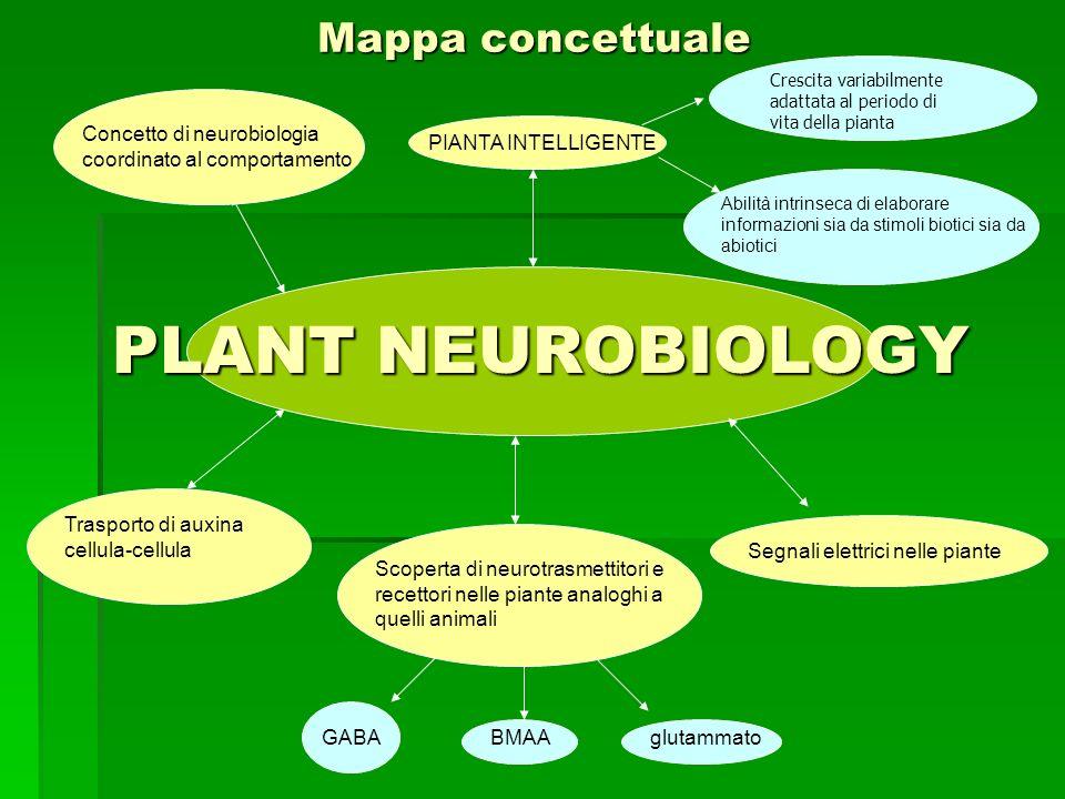 Mappa concettuale PLANT NEUROBIOLOGY PLANT NEUROBIOLOGY Concetto di neurobiologia coordinato al comportamento PIANTA INTELLIGENTE Crescita variabilmen