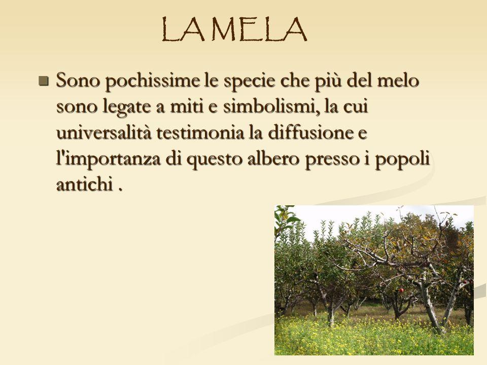 Sono pochissime le specie che più del melo sono legate a miti e simbolismi, la cui universalità testimonia la diffusione e l'importanza di questo albe