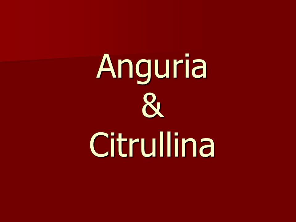 L anguria è una ricca fonte di citrullina, un aminoacido che può essere metabolizzato in arginina, un amminoacido essenziale per gli esseri umani.