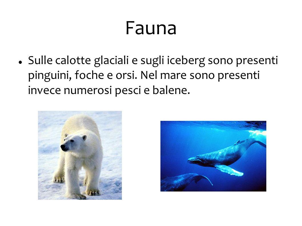 Fauna Sulle calotte glaciali e sugli iceberg sono presenti pinguini, foche e orsi. Nel mare sono presenti invece numerosi pesci e balene.