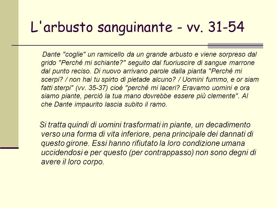 L'arbusto sanguinante - vv. 31-54 Dante