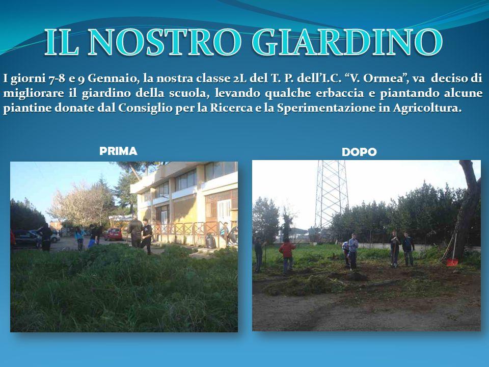 I giorni 7-8 e 9 Gennaio, la nostra classe 2L del T. P. dellI.C. V. Ormea, va deciso di migliorare il giardino della scuola, levando qualche erbaccia
