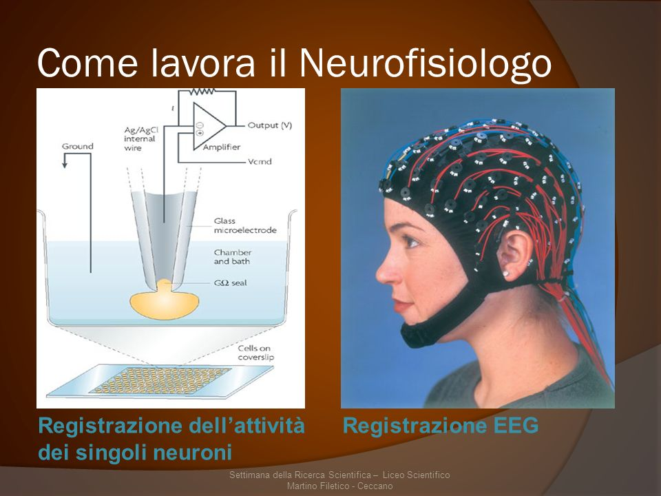 Come lavora il Neurofisiologo Registrazione dellattività dei singoli neuroni Registrazione EEG Settimana della Ricerca Scientifica – Liceo Scientifico Martino Filetico - Ceccano