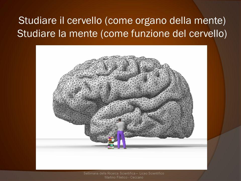 Neurofisiologia Funzionamento delle unità cellulari del Sistema Nervoso Centrale – i neuroni Studio delle modificazioni cellulari del neurone durante il suo ciclo vitale – plasticità neurale Come i neuroni comunicano tra di loro – plasticità sinaptica Come i neuroni si aggregano per assolvere a funzioni comuni – unità o nuclei neuronali Come i nuclei neuronali si modificano e comunicano con gli altri nuclei – circuiti neuronali Funzionamento in parallelo dei circuiti cerebrali durante un determinato comportamento – organizzazione delle attività cerebrali Settimana della Ricerca Scientifica – Liceo Scientifico Martino Filetico - Ceccano