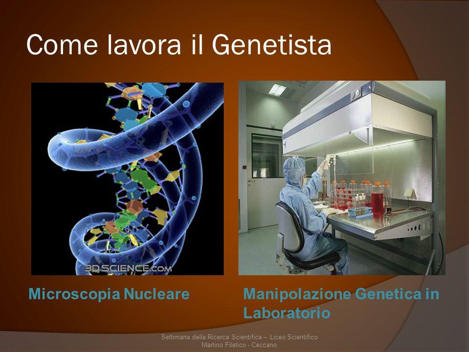 Come lavora il Genetista Microscopia NucleareManipolazione Genetica in Laboratorio Settimana della Ricerca Scientifica – Liceo Scientifico Martino Filetico - Ceccano