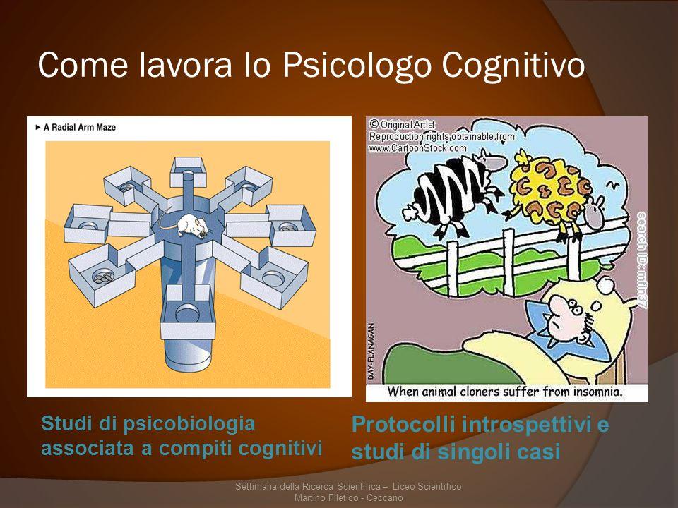 Come lavora lo Psicologo Cognitivo Studi di psicobiologia associata a compiti cognitivi Protocolli introspettivi e studi di singoli casi Settimana della Ricerca Scientifica – Liceo Scientifico Martino Filetico - Ceccano