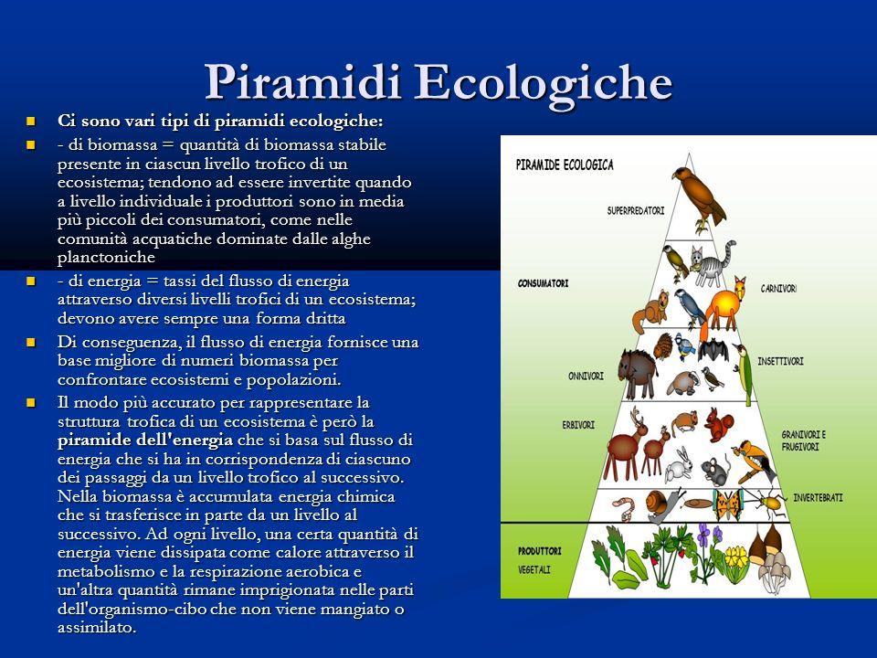 Piramidi Ecologiche Ci sono vari tipi di piramidi ecologiche: Ci sono vari tipi di piramidi ecologiche: - di biomassa = quantità di biomassa stabile presente in ciascun livello trofico di un ecosistema; tendono ad essere invertite quando a livello individuale i produttori sono in media più piccoli dei consumatori, come nelle comunità acquatiche dominate dalle alghe planctoniche - di biomassa = quantità di biomassa stabile presente in ciascun livello trofico di un ecosistema; tendono ad essere invertite quando a livello individuale i produttori sono in media più piccoli dei consumatori, come nelle comunità acquatiche dominate dalle alghe planctoniche - di energia = tassi del flusso di energia attraverso diversi livelli trofici di un ecosistema; devono avere sempre una forma dritta - di energia = tassi del flusso di energia attraverso diversi livelli trofici di un ecosistema; devono avere sempre una forma dritta Di conseguenza, il flusso di energia fornisce una base migliore di numeri biomassa per confrontare ecosistemi e popolazioni.