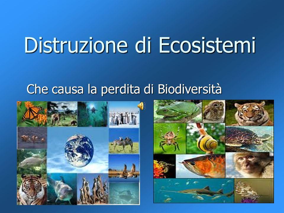 Distruzione di Ecosistemi Che causa la perdita di Biodiversità