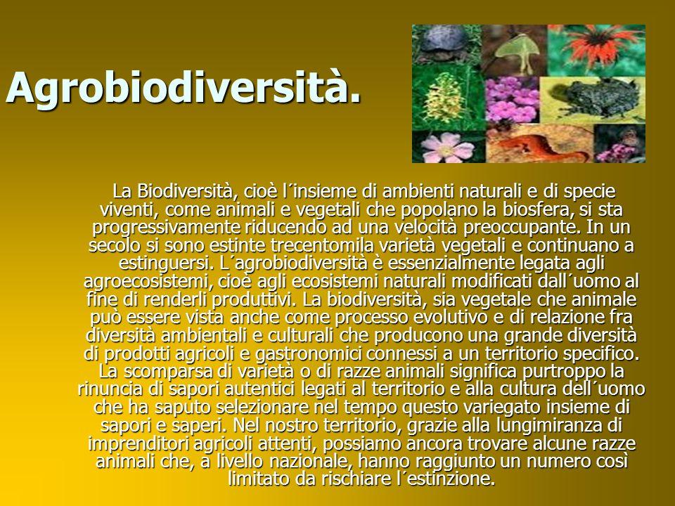 Creato da: Luca B. NadiaEralba Luca V.
