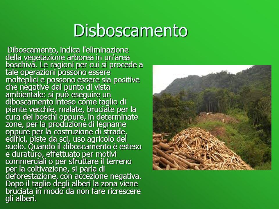 Disboscamento Disboscamento Diboscamento, indica l eliminazione della vegetazione arborea in un area boschiva.