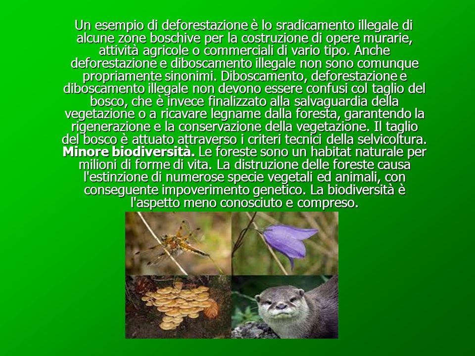 Disboscamento Disboscamento Diboscamento, indica l'eliminazione della vegetazione arborea in un'area boschiva. Le ragioni per cui si procede a tale op